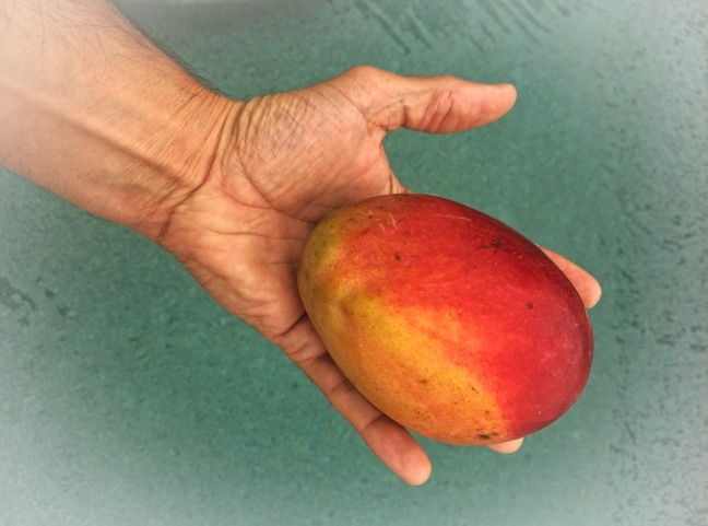 vegetarian_mango_fruit-landscape2
